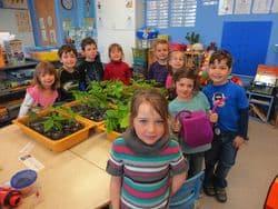 Un groupe d'enfants dans la classe est engagé dans la culture de plantes